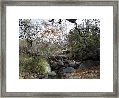 Madera Creek Framed Print by Feva Fotos