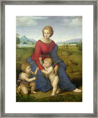 Madonna In The Meadow Framed Print by Raphael