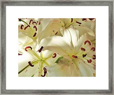Madonna Lilies Framed Print