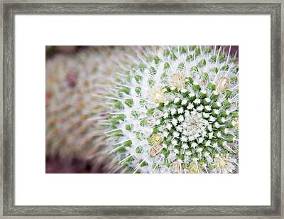 Madrid Botanical Garden 1 Framed Print