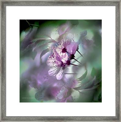Framed Print featuring the photograph Madrid Flowers by Alfonso Garcia