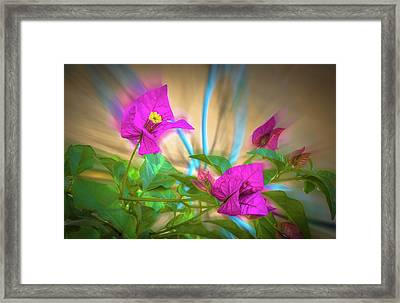 Magenta Magic Framed Print by Mark Dunton