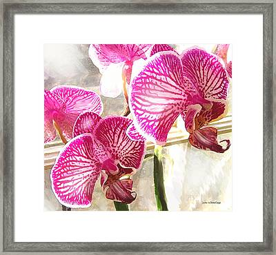 Magenta Orchids Framed Print by Jane Schnetlage