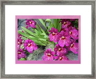 Magenta Orchids Framed Print by Lorraine Baum