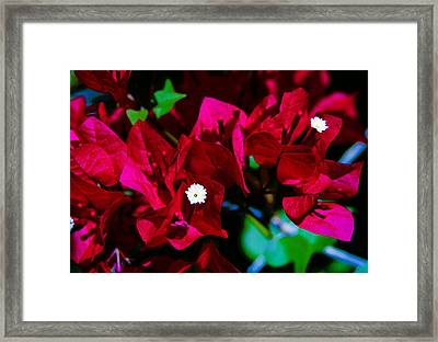 Magenta Pop Framed Print