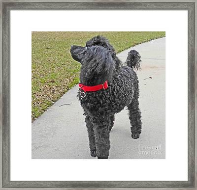 Maggie On Bird Watch Framed Print