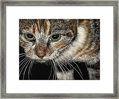 Maggie The Cat Framed Print by Robert Goudreau
