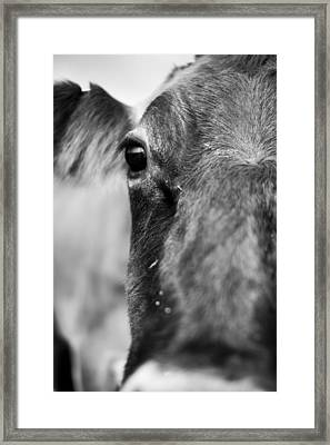 Maggie The Cow Abstract Framed Print by Dustin K Ryan