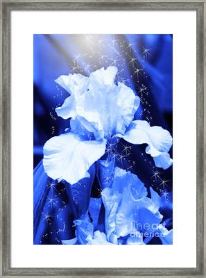 Magic Blue Iris  Framed Print by Cathy  Beharriell