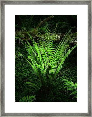 Magic Fern Framed Print by Svetlana Sewell