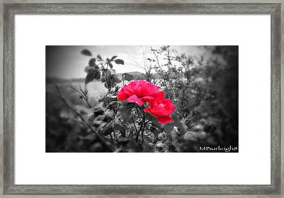 Magic Flower Framed Print by Michael Burleigh