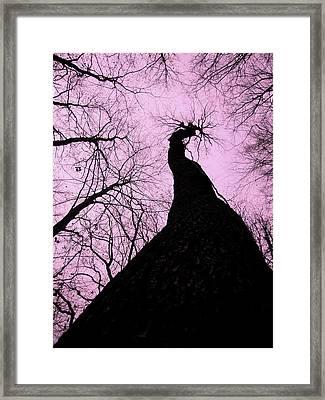 Magic Forest _3 Framed Print