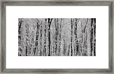 Magic Forest Framed Print by Gabriela Insuratelu
