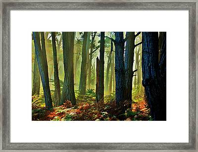 Magic Forest Framed Print by Helen Carson