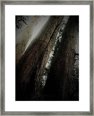 Magic Forest_1 Framed Print