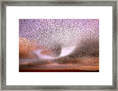 Magic In The Air - Starling Murmurations Framed Print by Roeselien Raimond
