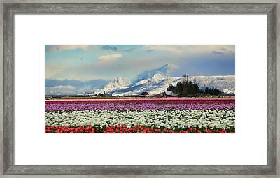 Magic Landscape 1 - Tulips Framed Print by Rick Lawler