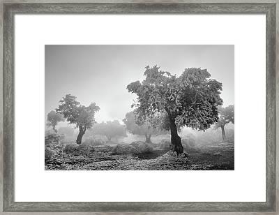 Magic Morning Bw Framed Print