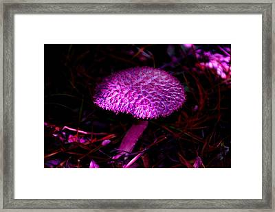 Magic Mushroom Framed Print by Debbie May