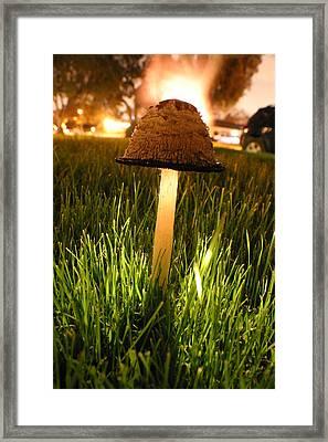 Magic Mushroom Framed Print by Jack Edjourian