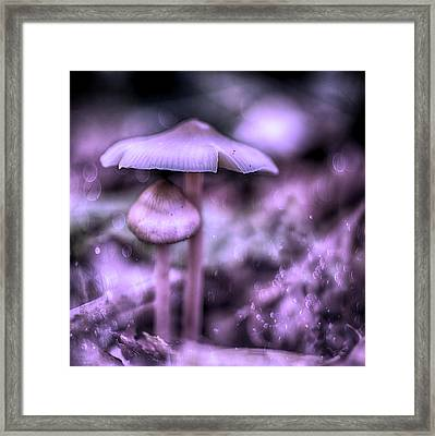 Magic Mushrooms  Framed Print by Guna Andersone