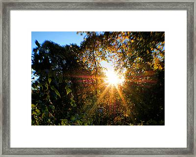 Magic Of Sun Framed Print by Lilia D