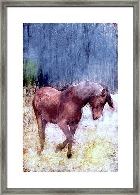 Magic On The Farm Framed Print