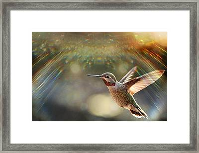 Magic Framed Print by Rory Sagner