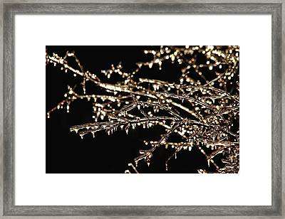 Magic Show Framed Print by Debbie Oppermann
