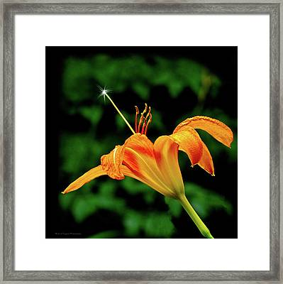 Magic Wand - Lily Framed Print by Michael Taggart II