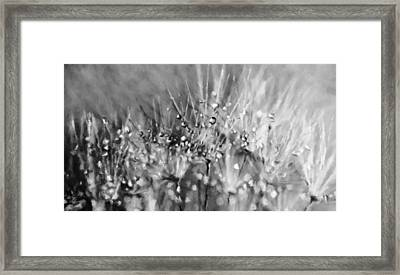 Magical Array Of Black And White Framed Print by Georgiana Romanovna