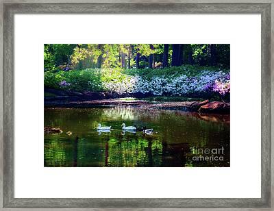 Magical Beauty At The Azalea Pond Framed Print by Tamyra Ayles