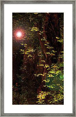 Magical Dark Woods Framed Print by Jean Booth