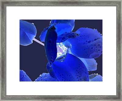 Magical Flower I - Blue Velvet Framed Print
