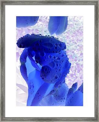 Magical Flower I I I Framed Print