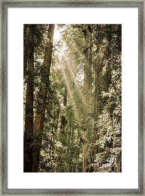 Magical Forest 2 Framed Print