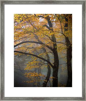 Magical Forest Blue Ridge Parkway Framed Print