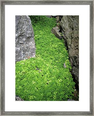 Magical Green Passage Framed Print