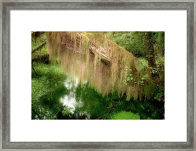 Magical Hall Of Mosses - Hoh Rain Forest Olympic National Park Wa Usa Framed Print