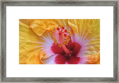 Magical Hibiscus  Framed Print