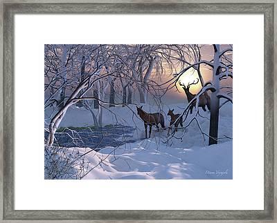 Elk On A Snowy Night Framed Print