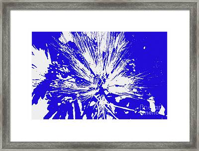 Magical Mimosa Framed Print by D Hackett