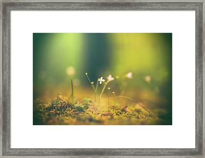 Framed Print featuring the photograph Magical Moment by Shane Holsclaw