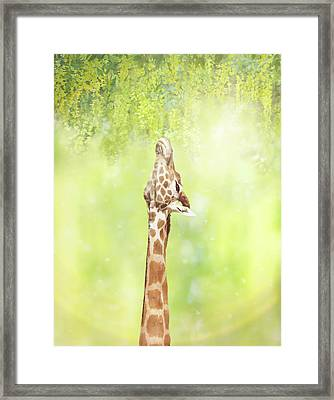 Magical Moments Framed Print by Margaret Goodwin