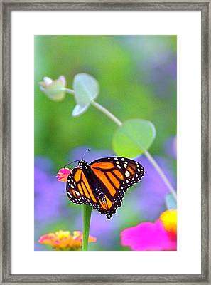 Framed Print featuring the photograph Magical Monarch by Byron Varvarigos