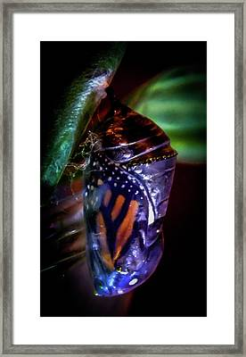Magical Monarch Framed Print