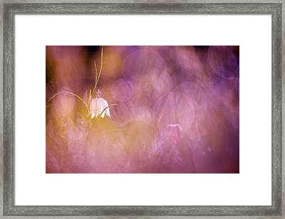 Magical Mood Framed Print