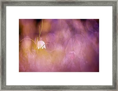 Magical Mood Framed Print