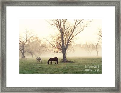 Magical Morning Framed Print by Scott Pellegrin