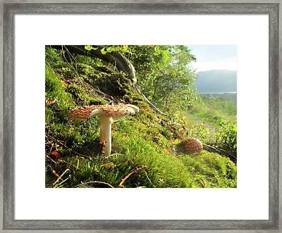Magical Mushrooms 1 Framed Print